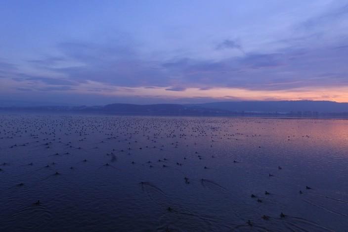 Vögel auf dem Untersee