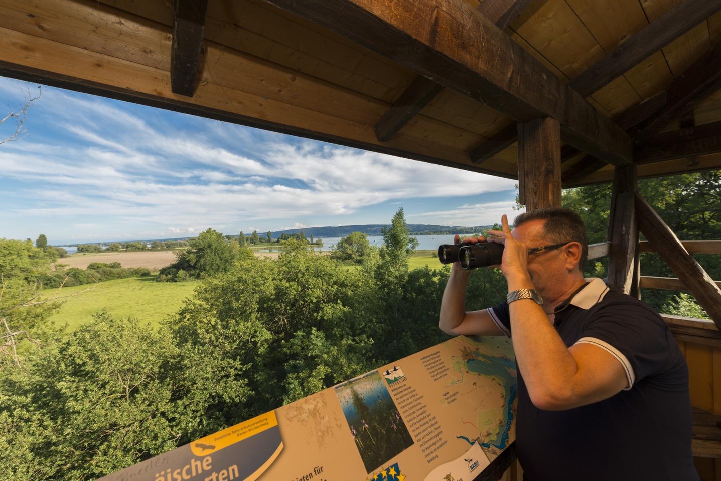 Vogelbeobachtung vom Mettnauturm