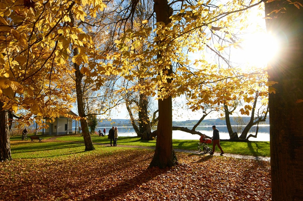 Mettnau-Park im Herbst